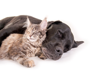 salud geriátrica en perros gatos