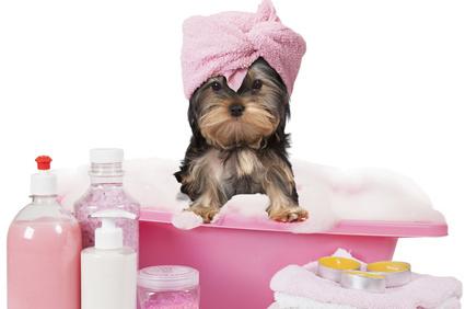 spa terapéutico canino y felino