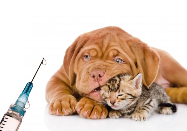 cvbenetússer-plan-vacunación