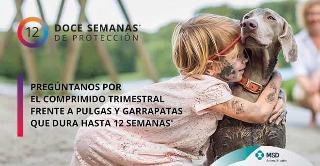 1.+Bravecto+Banner+niña