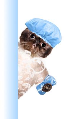 otros servicios veterinarios