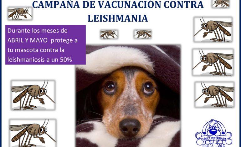 campaña leishmaniosis canina