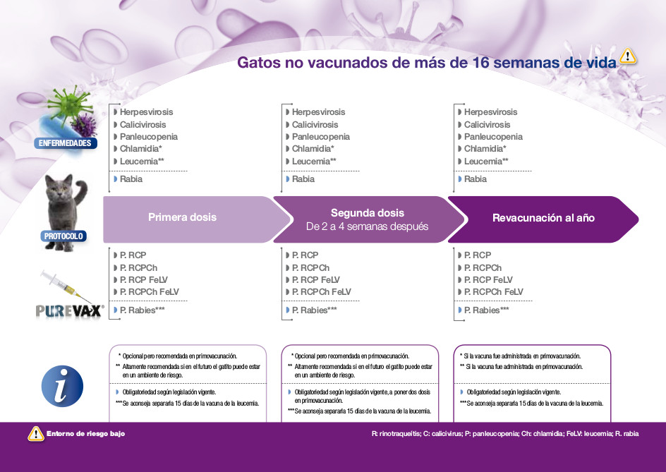 protocolos-vacunales-gatos-mayor-16semanas