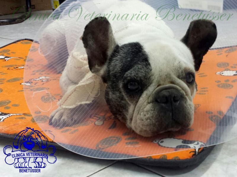 tumores cáncer piel perros gatos