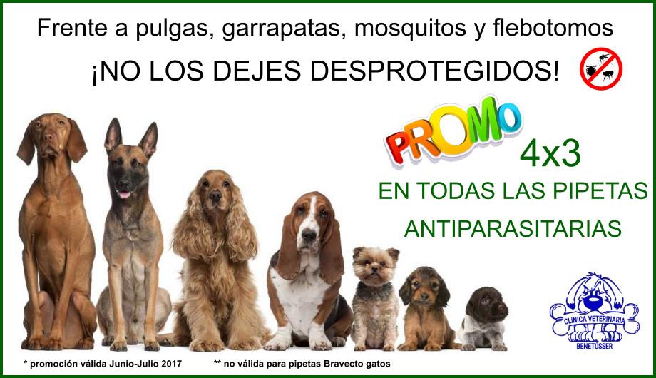 promoción 4x3 pipetas antiparasitarias perros gatos