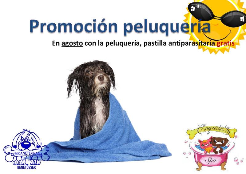 peluquería perros promoción