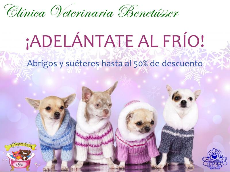 veterinaria benetússer promociones abrigos perros