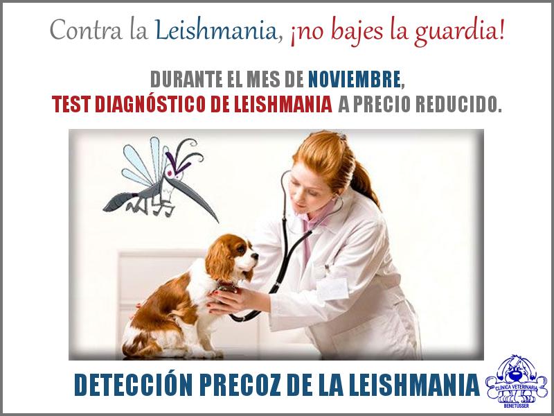 campaña leishmania perros leishmaniosis