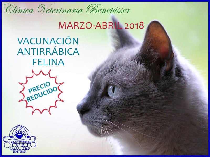 veterinaria benetússer valencia vacunación rabia gatos
