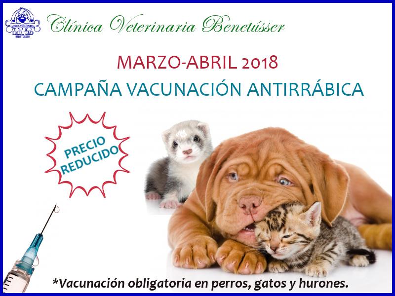 perros gatos hurones vacunación rabia