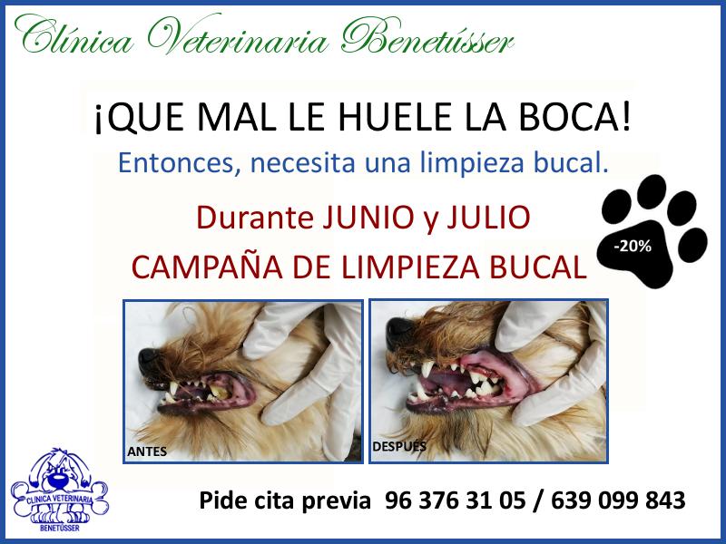 veterinaria benetússer perros boca enfermedad_periodontal limpieza_bucal