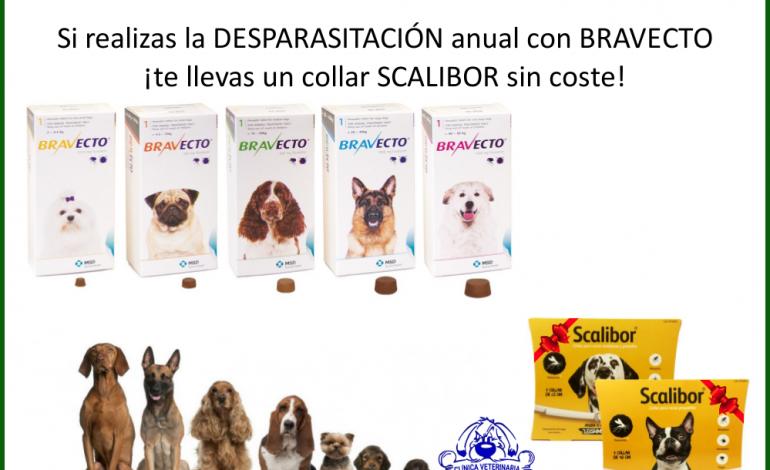 veterinaria benetússer promociones desparasitación bravecto scalibor