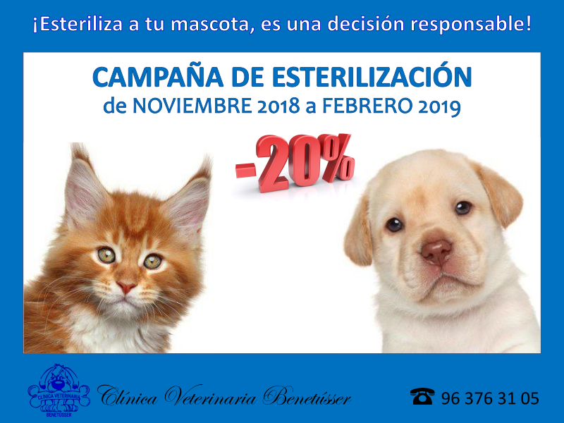 campaña esterilización canina y felina
