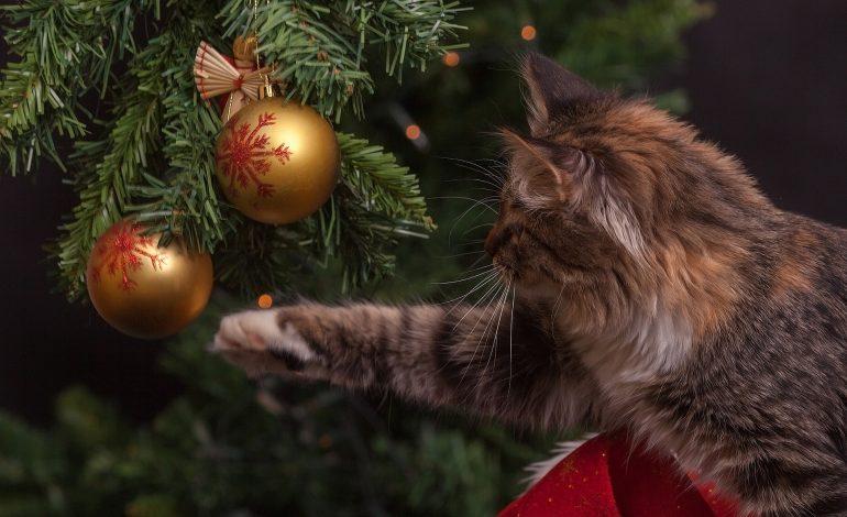 Navidad perros gatos