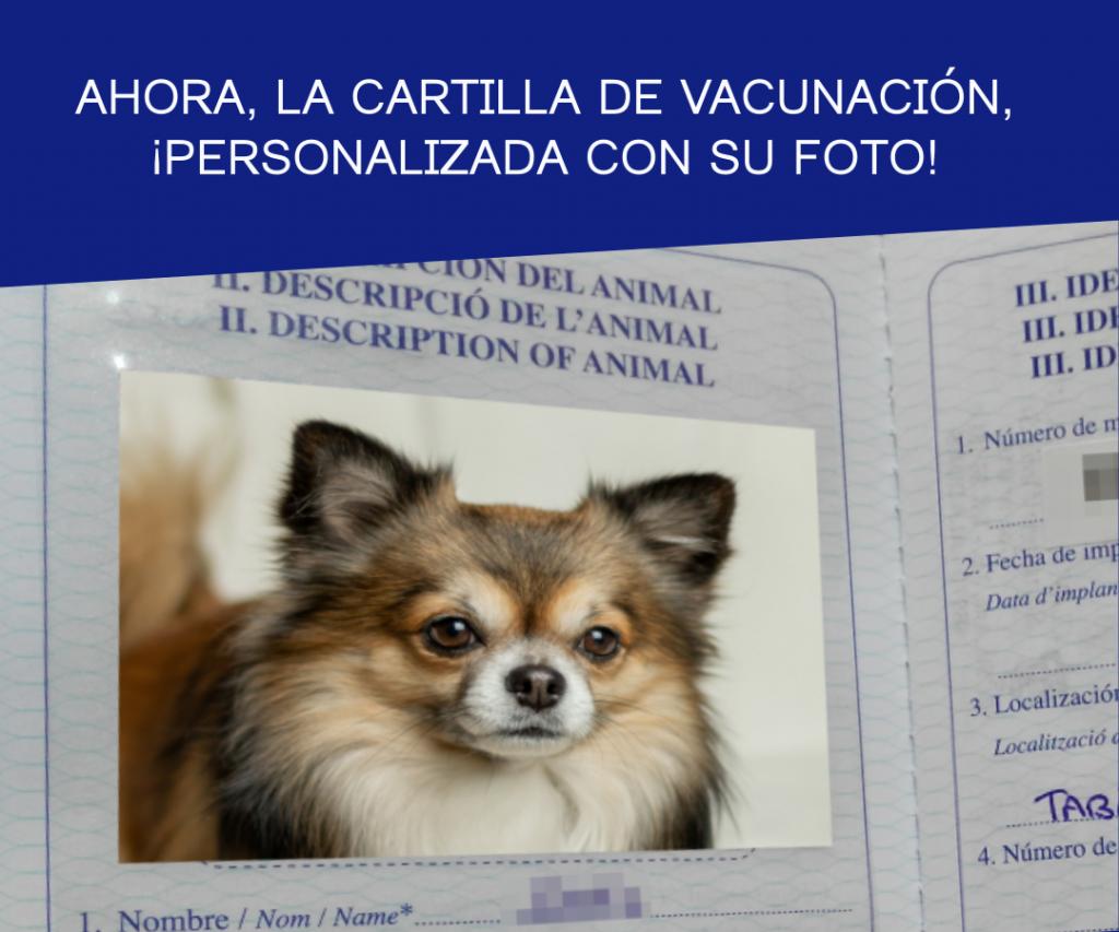 clínica veterinaria benetússer promoción vacunación microchip foto cartilla