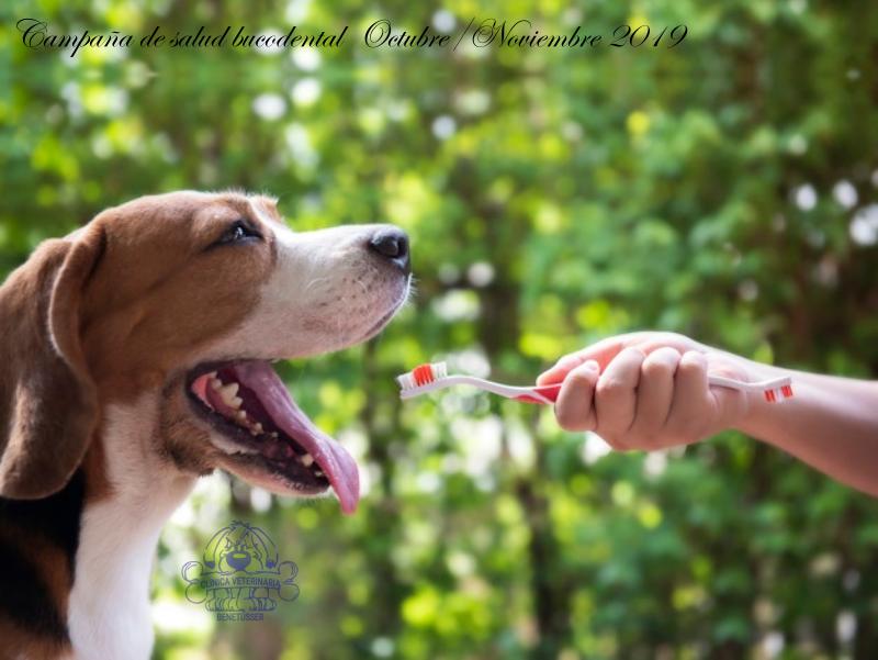 campaña limpieza bucal en perros durante octubre y noviembre de 2019