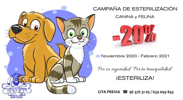 campaña de esterilización canina y felina