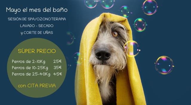 Peluquería canina - Mayo es el mes del baño